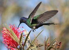 Hummingbirds remind me of Grandma.