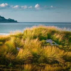 Omaha, Auckland, New Zealand. This is where Lauren Kerr goes on Holiday!