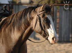 Quarter Horses, American Quarter Horse, Appaloosa, Palomino, All The Pretty Horses, Beautiful Horses, Wild Horses, Zebras, Little Pony
