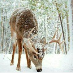 WV Wildlife