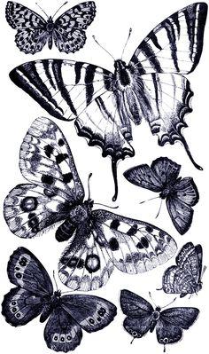 **FREE ViNTaGE DiGiTaL STaMPS**: Free Vintage Digital Stamp - Butterflies