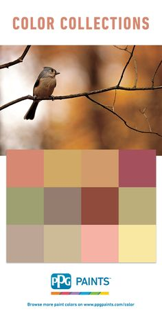 PPG Paints™ has the right paint color for any home decorating or home renovation painting project. Explore our paint color collections to find your perfect hue! Trending Paint Colors, Paint Colors For Home, House Colors, Ppg Paint, Paint Color Palettes, Color Trends, All The Colors, Color Inspiration, Hue