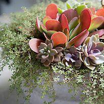 Design by Terrain: Fall Succulent Centerpiece in The BULLETIN at Terrain #anthropologie #pintowin