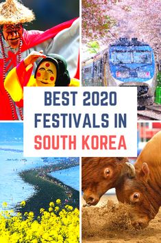 Want to try mud wrestling, or stroll through cherry blossoms? Want to witness a miracle, or catch fish bare-handed in icy water? Then Korea is the place with you. There are so many amazing festivals in Korea throughout the year, you're sure to be able to find a festival that suits you. Korean festivals are very varied and unique, there's a lot of things you simply can't do anywhere else in the world. Be sure not to miss out! #festivals #festival #koreanfestival #koreanfestivals #korea South Korea Travel, Asia Travel, Travel Advice, Travel Guides, Travel Tips, Travel Destinations, Travel Articles, Budget Travel, Festivals Around The World
