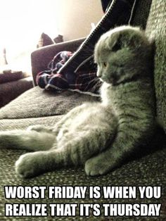 Sitting Like a Hoomin is Only for Fridays - LOLcats is the best place to find and submit funny cat memes and other silly cat materials to share with the world. We find the funny cats that make you LOL so that you don't have to. Funny Shit, The Funny, Funny Cats, Funny Animals, Funny Memes, Hilarious, Funny Stuff, Funny Things, Jokes