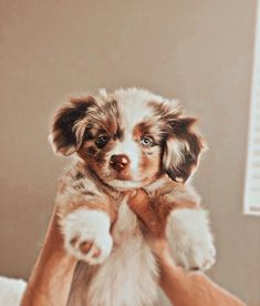 Cute Baby Puppies, Super Cute Puppies, Baby Animals Super Cute, Cute Wild Animals, Cute Little Animals, Baby Animals Pictures, Cute Animal Photos, Cute Animal Pictures, Cute Funny Dogs