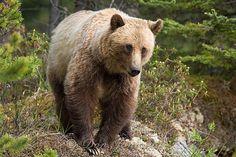 Banff Jasper Animals by Don Johnston, via 500px