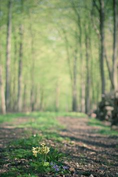 The summer woodland