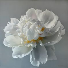 "Tatyana Klevenskiy ~ ""white Peony"" ~ Oil on Canvas 122 x 122 cm Love Flowers, White Flowers, Beautiful Flowers, Peony Painting, Oil Painting On Canvas, Painting Art, Art Floral, Peony Flower, Flower Art"