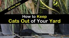 As a homeowner, you maybe wondering how to keep cats out of your yard. Here are 22 simple ways you can keep stray cats from pooping in your yard. Plants That Repel Cats, Cat Repellant Outdoor, Keep Cats Away, Outdoor Play Areas, Outdoor Games, Water Games For Kids, Texas Gardening, Replant, Backyard Games