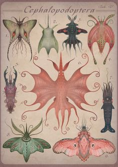 Cephalopodoptera, An Animated Illustration Series That Combines Molluscs and…