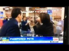 This is a video of Nikkie Kinziger (RiLee Kennels) being interviewed by CNN with her Best of Breed Tibetan Terrier Reese at the Westminster Dog Show 2013