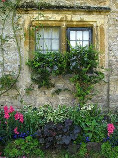 Garden Window Beauty..