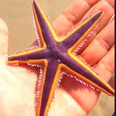 Starfish ☀