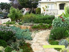 An Oakland Garden of Succulents   Flickr - Photo Sharing!