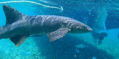 Belize- Shark, Rays & Island Getaway (5.5 hours) $104.99 Carnival Cruise Deals, Independence Of The Seas, Western Caribbean Cruise, Cruise Packages, Shore Excursions, Belize, Dream Vacations, New Orleans, Shark