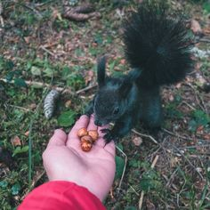 In Switzerland you can find many types of squirrels. They are shy but friendly. Cute Squirrel, Squirrels, All I Want, Switzerland, Animals, Instagram, Chipmunks, Animales, Animaux