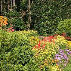 Are you having a beautiful day? #mossmountainfarm #joy #gardens #sharethebounty #provenwinners