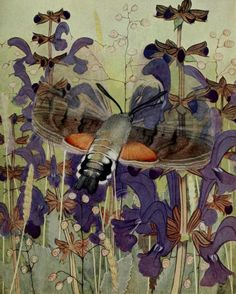 Hummingbird hawk-moth with Sage, Quaking grass and Crested dog's- tail. Plate from 'Les Papillons Dans La Nature' by Paul A. Robert. Published 1934 by Éditions Delachaux and Niestlé archive.org