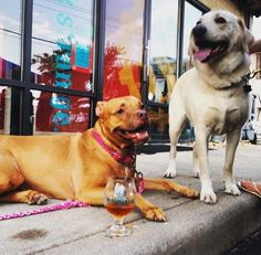 Pups & Pints: Dog-Friendly Virginia Craft Breweries | Virginia's Travel Blog | Bloglovin'