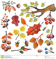 autumn leaf drawing - Google Search
