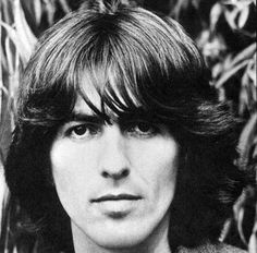 Oh No They Didn't! - Beatles George Harrison memorial tree killed by beetles