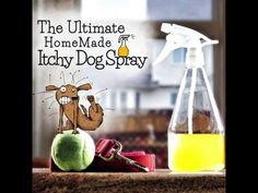 This Itchy Dog Spray has been an Internet sensation and you won't want to miss it. If your dog is in discomfort, this may be just what you are looking for. Get the details now.