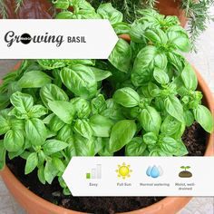 Grow an entire vegetable garden based on your local temperatures and sun levels. #Gardening #DIY