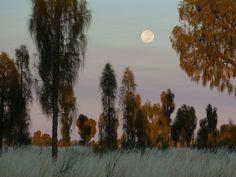 El intenso resplandor de la luna ilumina el  paisaje nocturno de los robles del desierto en el Parque Nacional de Uluru  Kata Tjuta