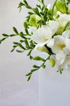 freesia august bloom