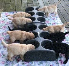 When Labrador puppies are involved, feeding time is a free-for-all Funny Dog Faces, Funny Dog Videos, Cute Funny Animals, Funny Animal Pictures, Funny Cute, Funny Dogs, Hilarious, Animals And Pets, Baby Animals