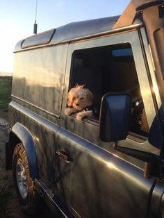 Land Rovers & Dogs