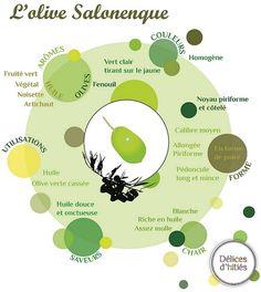 infographie olive salonenque