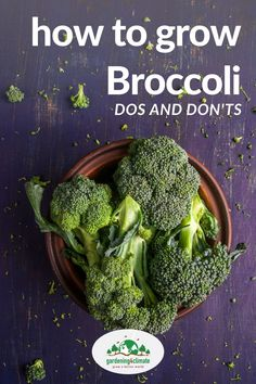 Broccoli is a favorite vegetable for most.and it is even better from your own garden! Learn here how to grow & care for Broccoli in your own vegetable garden and how to start broccoli plants from seed. Broccoli Plant, Growing Broccoli, How To Grow Broccoli, Growing Vegetables At Home, Planting Vegetables, Organic Vegetables, Fruits And Veggies, Backyard Vegetable Gardens, Permaculture