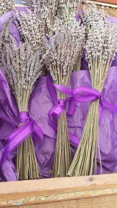Lavender market bunches at Soleado Lavender Farm Dickinson Maryland