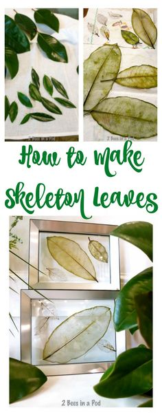 How to make skeleton leaves. These would be great for coating with resin once they've completely dried.