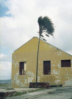 Marija Vidovic, Cuba