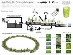 Algae Green Loop (10)