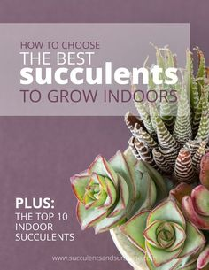 This free PDF is awesome! Learn how to choose succulents to grow indoors, plus find out 10 succulents that are great for indoor succulent gardens!