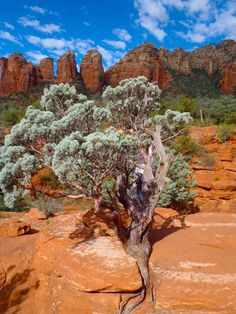 Isn't it amazing how the plants can grow right out of the rocks?   I love Sedona!