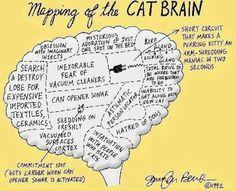 Cat brain :)
