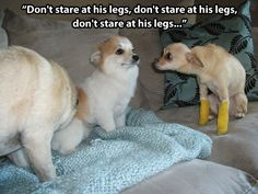 Don't stare at his legs.