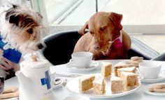 dog tea party
