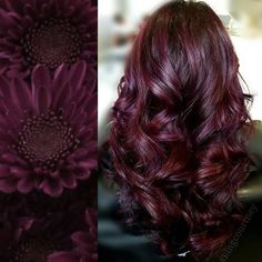 Discover the Best Hair Color Ideas To Celebrate Christmas New – Gold Hair Wine Red Hair Color, Hair Color And Cut, Cool Hair Color, Hair Colour, Wine Colored Hair, Red Wine, Color Red, Black Cherry Hair Color, Cherry Hair Colors