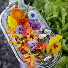 Syötävät kukat | Meillä kotona Calendula, Preserves, Cabbage, Table Decorations, Interior Design, Vegetables, Garden, Flowers, Plants