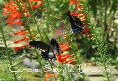 A wildlife garden full of swirling butterflies is a truly beautiful sight. You can achieve this for yourself in your wildlife garden by understanding the butterfly life cycle. You see, you need mor...