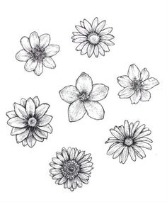 25 Beautiful Flower Drawing Information & Ideas - Brighter Craft - 25 Beautiful . - 25 Beautiful Flower Drawing Information & Ideas – Brighter Craft – 25 Beautiful Flower Drawing - Easy Flower Drawings, Beautiful Flower Drawings, Pencil Drawings Of Flowers, Flower Art Drawing, Watercolor Flower, Flower Sketches, Floral Drawing, Plant Drawing, Art Drawings Sketches