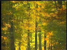 Ugledige skov (+playliste)