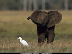 49 pics of baby elephants =)