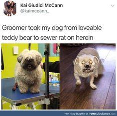 Haircut can make a lot of difference - FunSubstance Funny Animal Memes, Dog Memes, Cute Funny Animals, Funny Animal Pictures, Funny Relatable Memes, Cute Baby Animals, Funny Images, Funny Dogs, Animal Humour